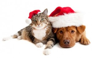 Cat and Dog with Santas Claus hats