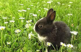konijn in gras-besmet RHD-VHS