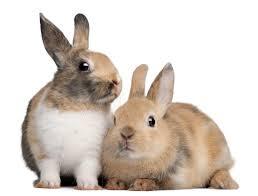 konijn-vaccinatie-dierenarts