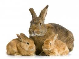 konijn en jongen vaccinatie