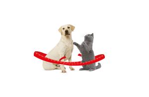 overgewicht bij kat en hond